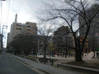 間もなく開花する予定の桜並木。