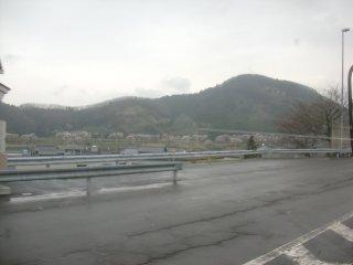 滋賀県内の桜は今が見頃。