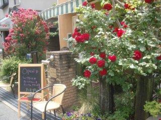 公園周辺もバラの花でいっぱいです。