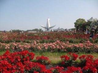 大陽の塔をバックから見る平和のバラ園です。