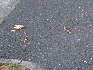 そして路上に散らばる破片。