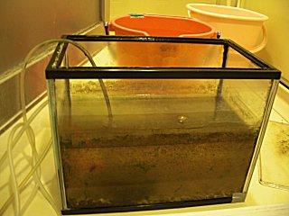 金魚の水槽を洗いました。