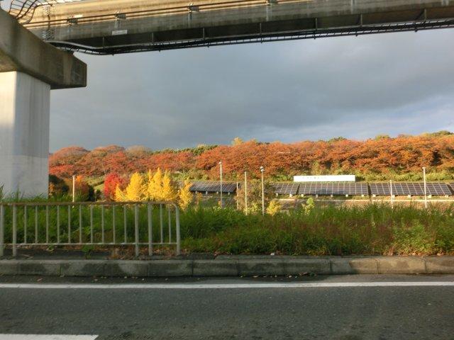 万博公園の紅葉です。