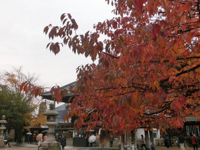 境内の樹木は美しく紅葉していました。