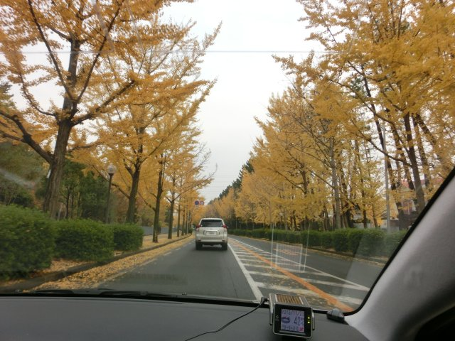 千里ニュータウン内の街路樹です。