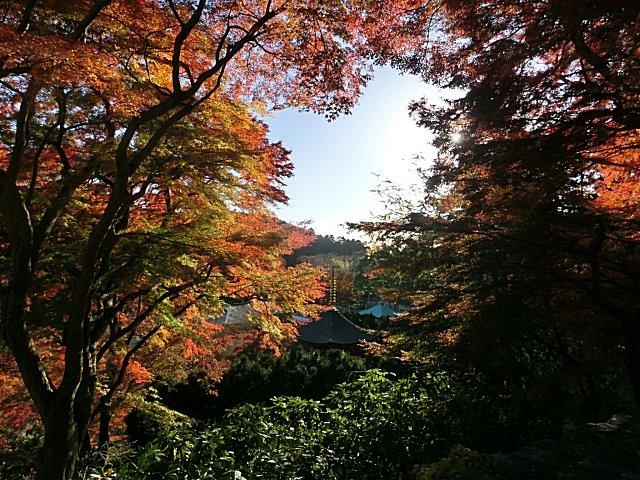紅葉が本当に美しい勝尾寺です。