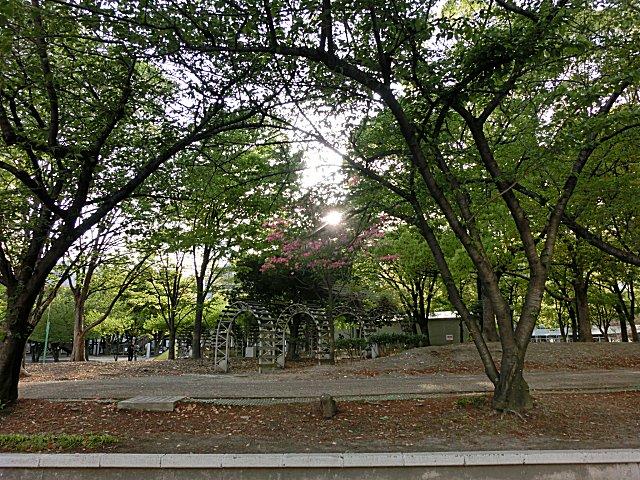 公園本来の美しさを取り戻しました。
