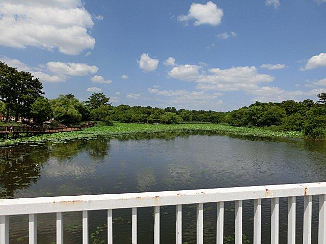 水草が生い茂り沼と化した池です。