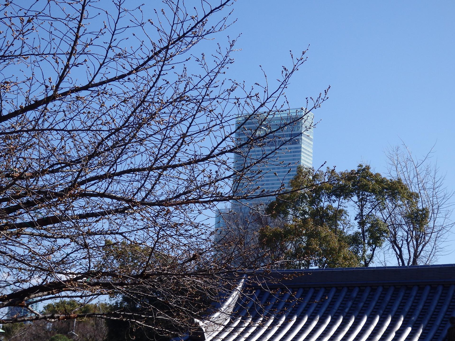 桜の木ごしにあべのハルカスを望む。