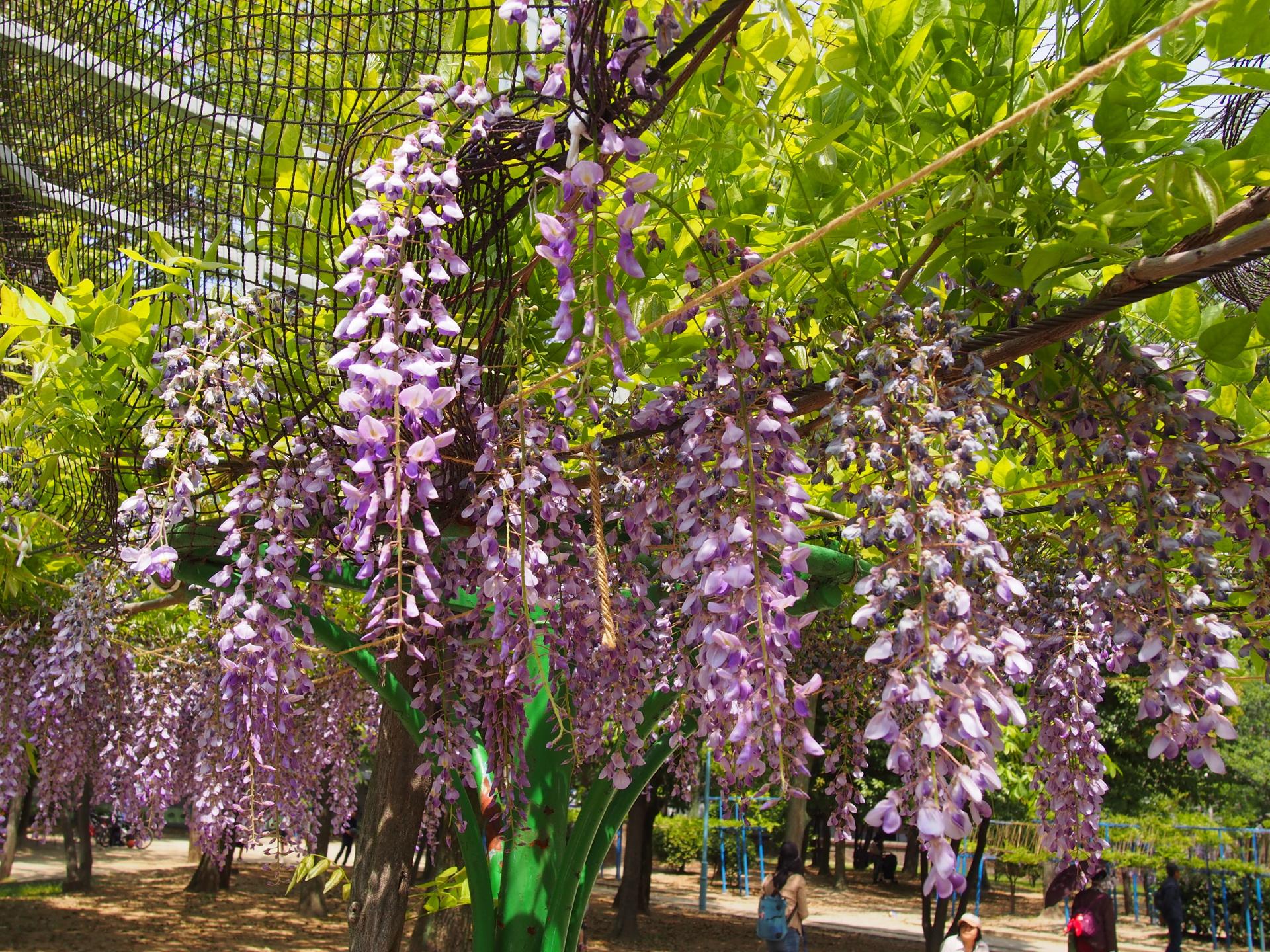 下福島公園です。