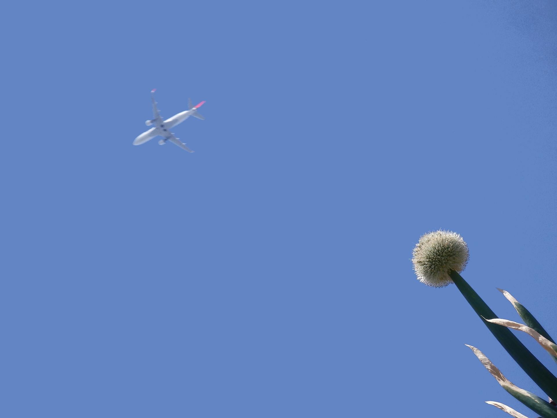 ネギ帽子と飛行機です。