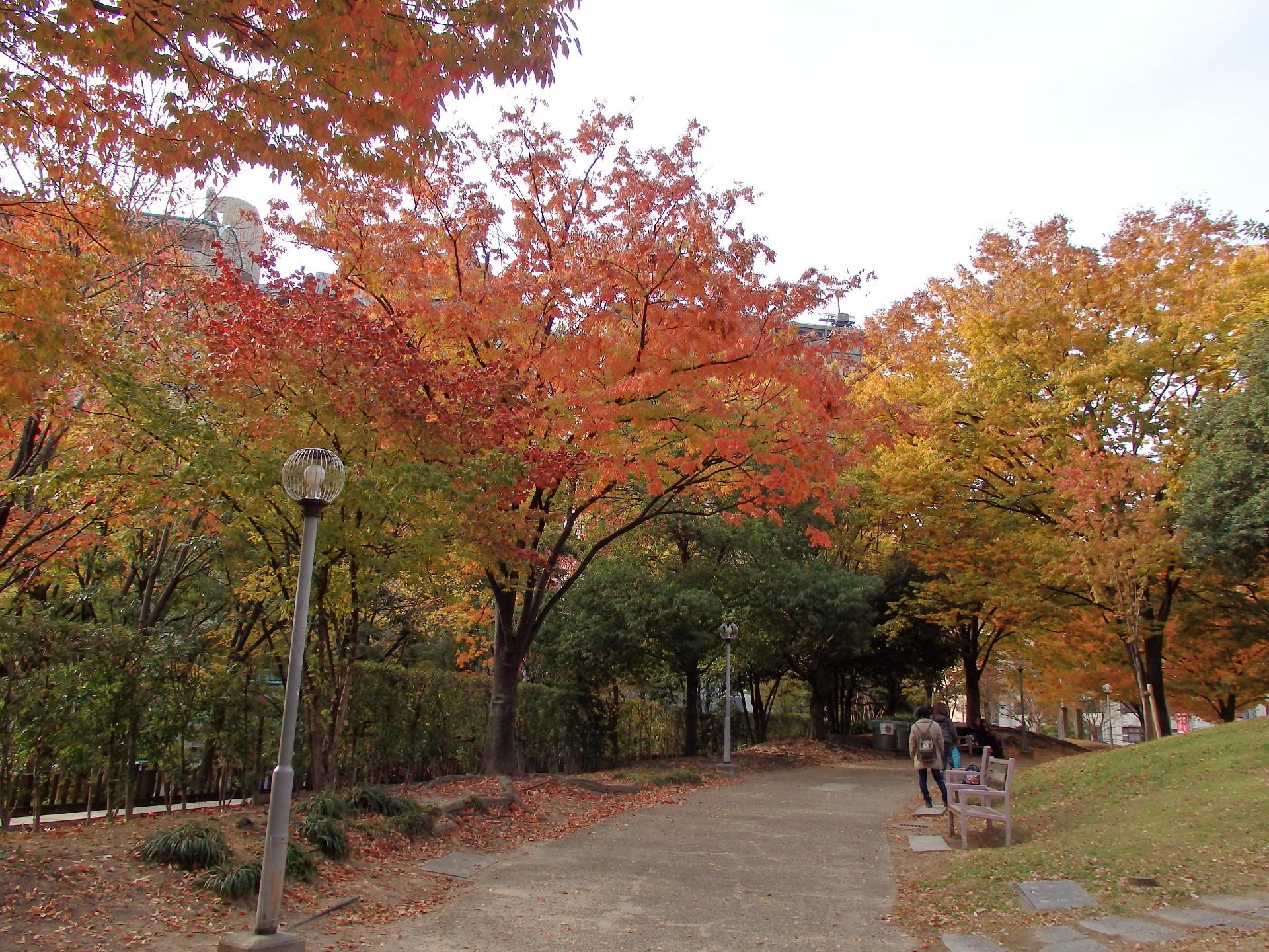 近所の公園の紅葉です。