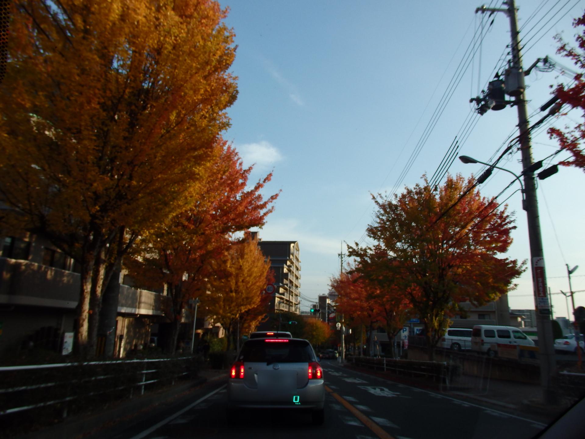 病院近くの紅葉通りです。