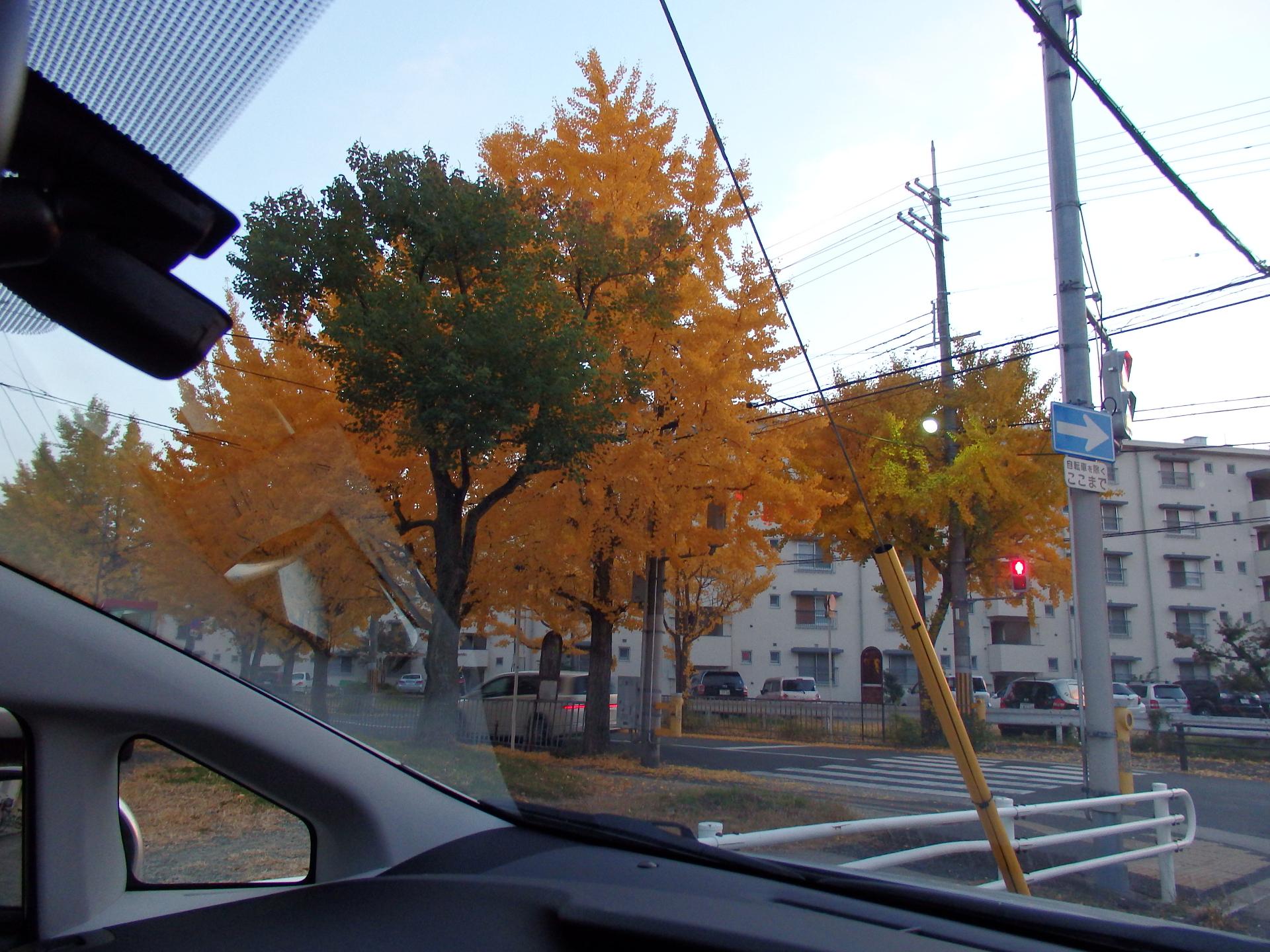 旧国鉄宿舎通りの紅葉です。