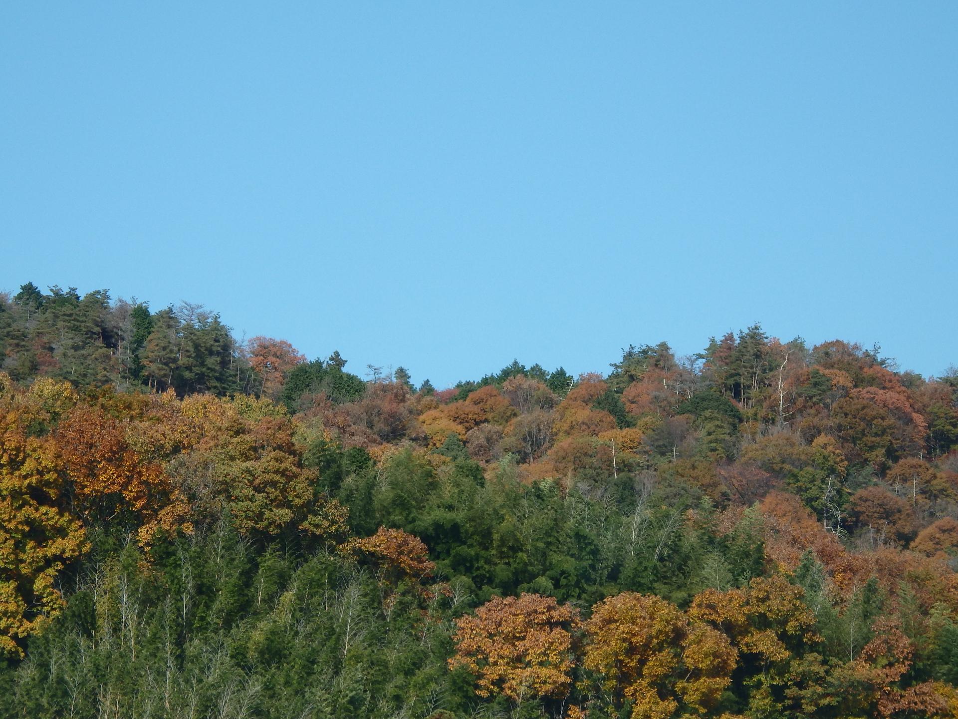 紅葉が見事な箕面の山。