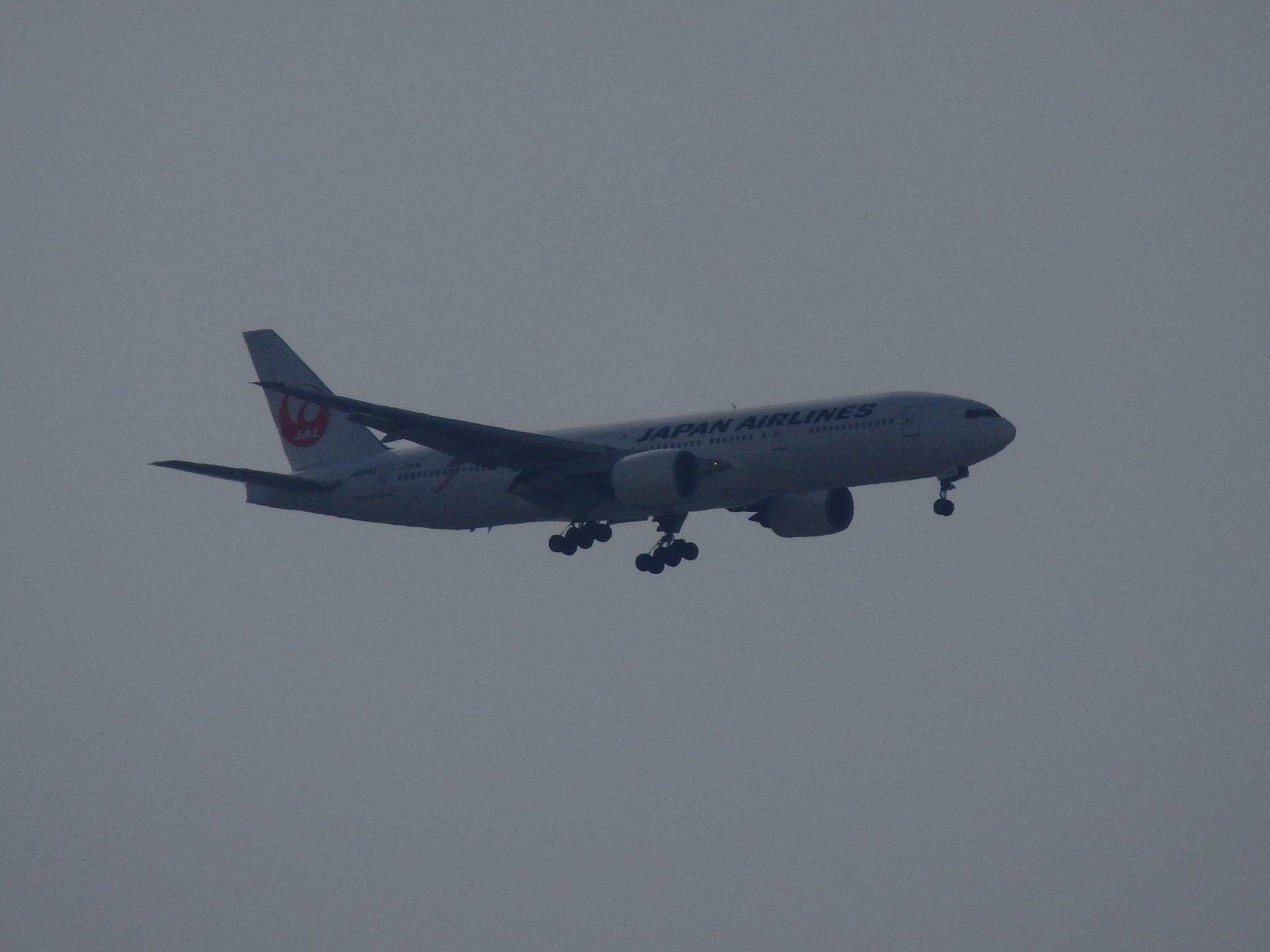 JALのピンクリボンジェットです。