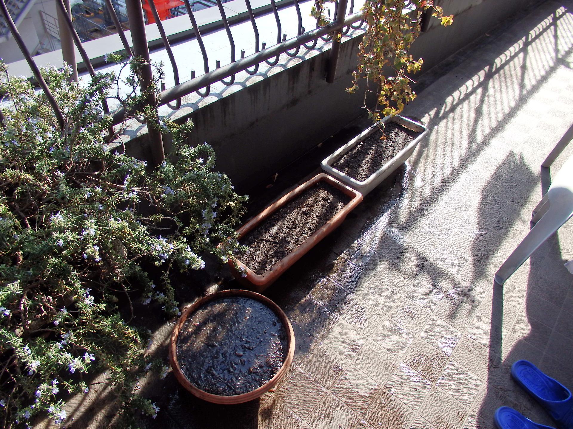 チューリップ球根の土植えを終わりました。