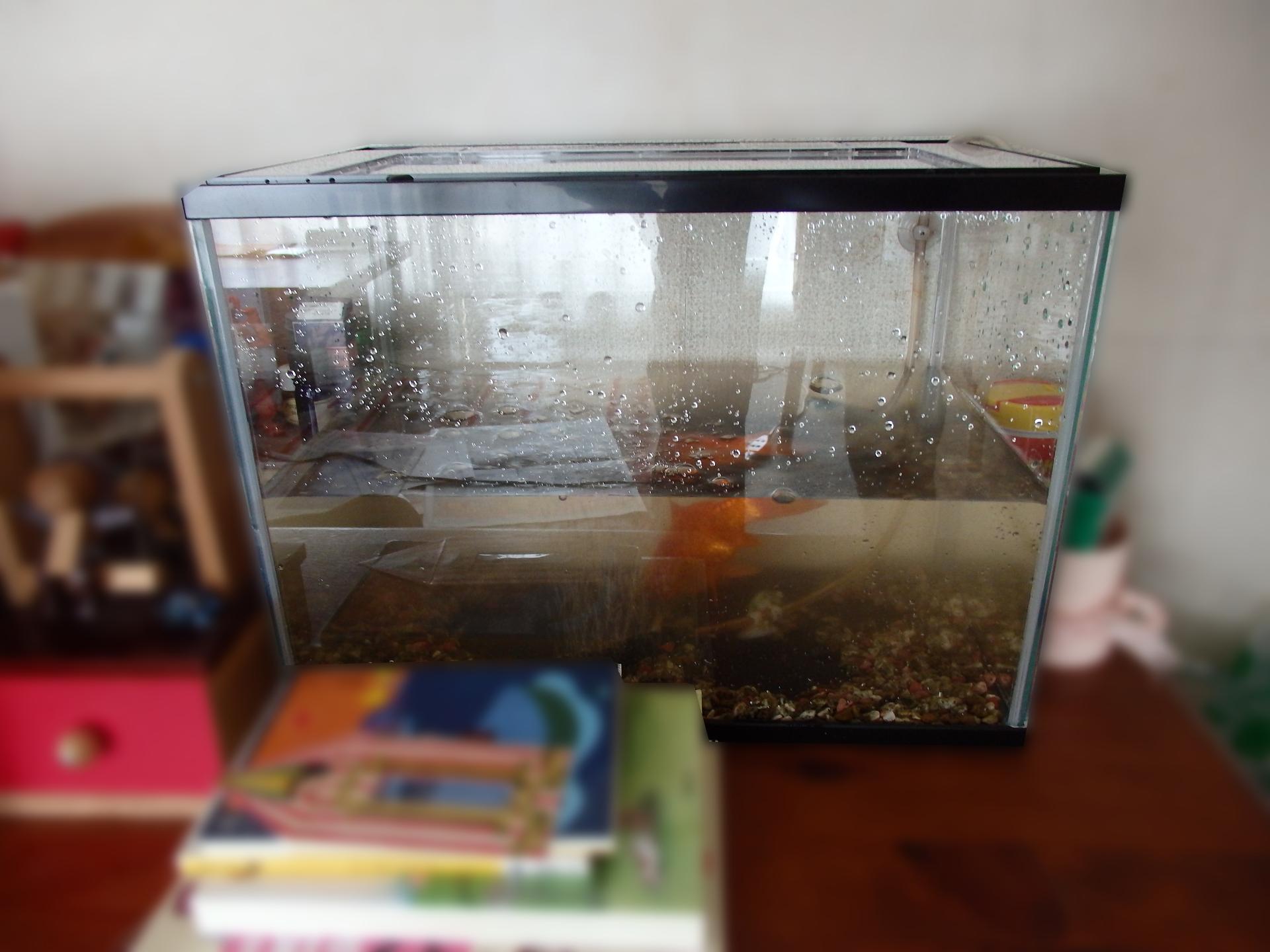 新しい金魚鉢です。