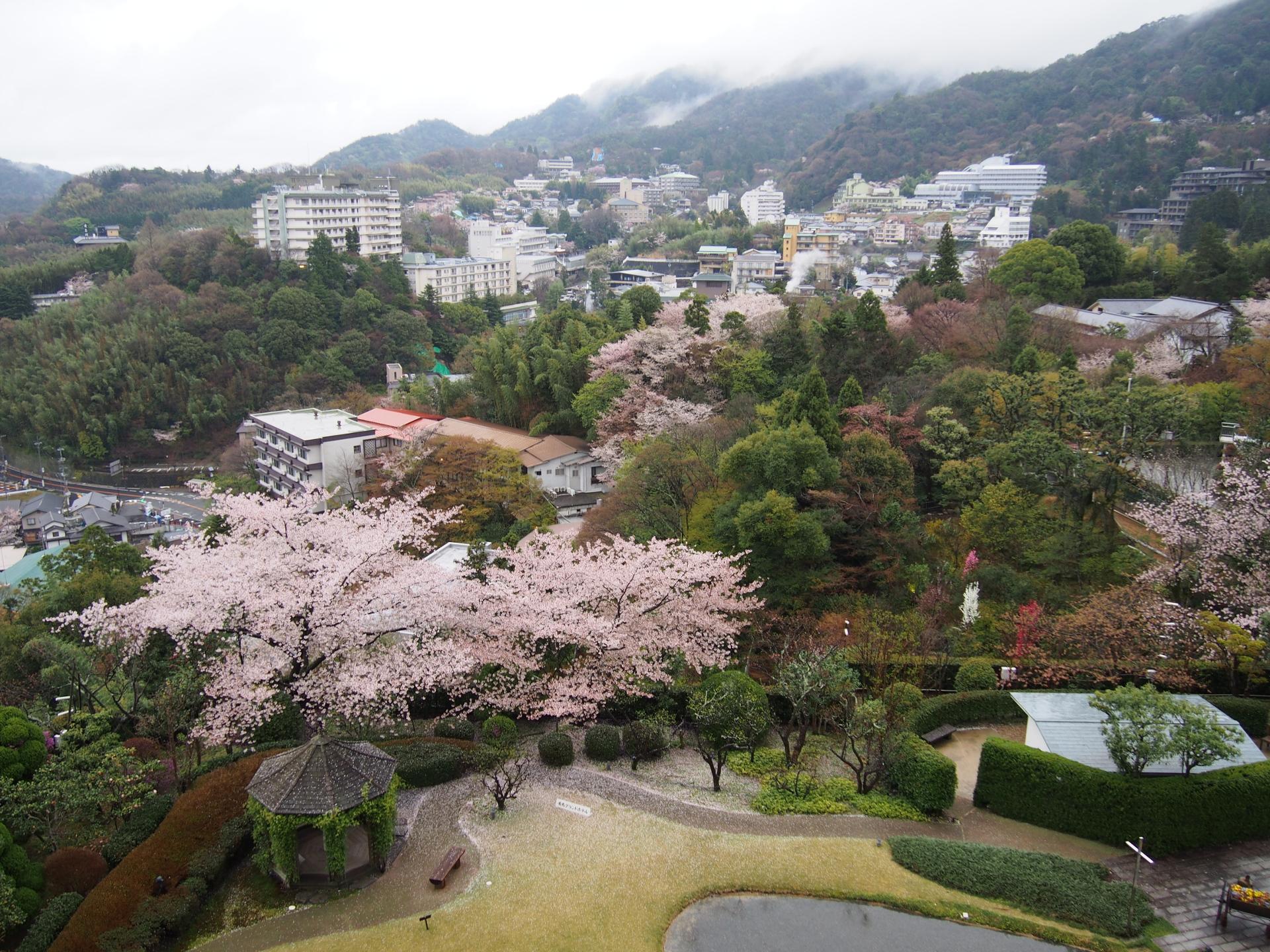 有馬グランドホテルの中庭の桜です。