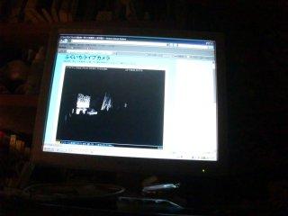 夜のふくいちライブカメラの映像です。